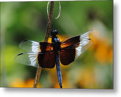 Metal Print featuring the photograph Dragonfly Zoom by Robert  Moss