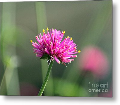 Dreaming In Fuschia II Metal Print by Suzanne Gaff
