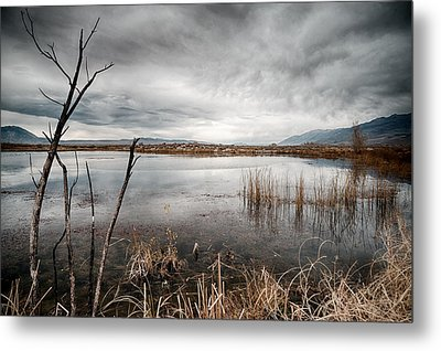 Dreary Metal Print by Cat Connor