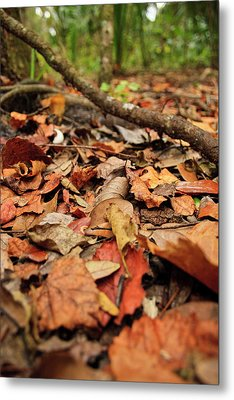 Dried Leaves On The Ground Metal Print