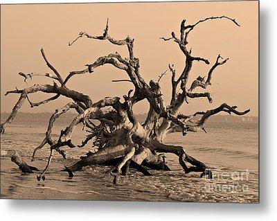 Driftwood Beach Jekyll Island Metal Print by Leslie Kirk