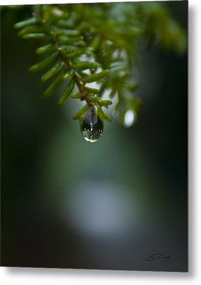 Drop Of Life In The Woods Metal Print