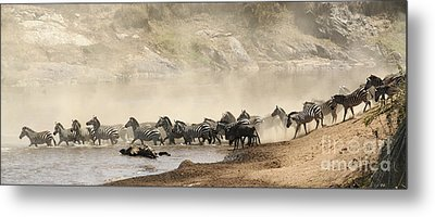 Metal Print featuring the photograph Dusty Crossing by Liz Leyden