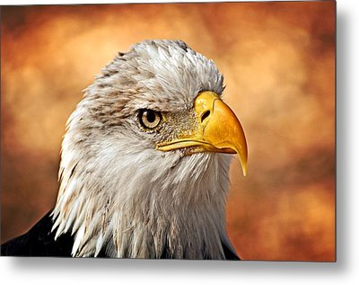 Eagle At Sunset Metal Print by Marty Koch
