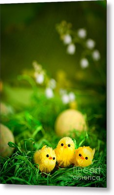 Easter Chicks Metal Print by Mythja  Photography