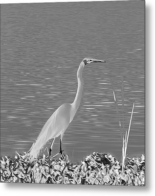 Metal Print featuring the photograph Egret In White Satin by Frank Bright