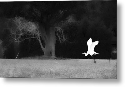 Metal Print featuring the photograph Egret's Shadow by Frank Bright