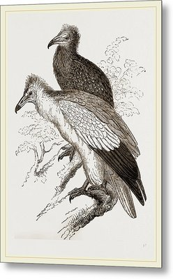 Egyytian Vultures Metal Print by Litz Collection