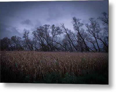 Metal Print featuring the photograph Electric Forest by Jason Naudi Photography
