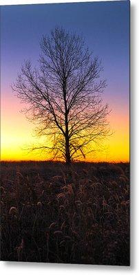 Ellis Island Lone Tree Metal Print by David Yunker