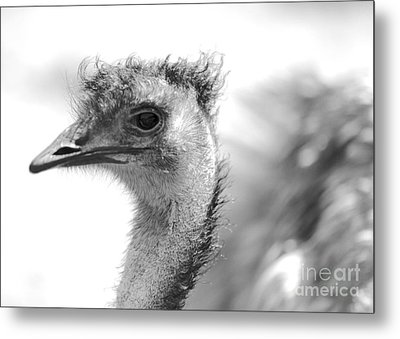 Emu - Black And White Metal Print by Carol Groenen