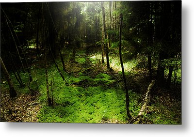 Enchanted Forest Metal Print by Kim Lagerhem