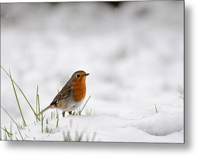 English Robin Metal Print by Ivelin Donchev