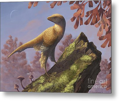 Eosinopteryx Brevipenna Perched Metal Print by Emily Willoughby