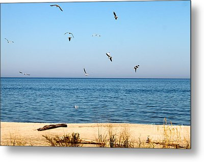 Erie Birds And Beach Metal Print by Jay Nodianos