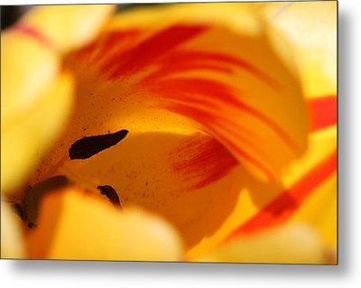 Essence Of Tulip Metal Print by  Andrea Lazar
