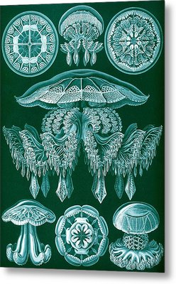 Examples Of Discomedusae Metal Print by Ernst Haeckel