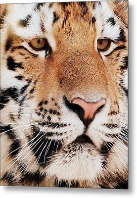 Eye Of The Tiger Metal Print by Ramona Johnston