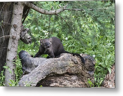 Eyes In The Forest Metal Print by Sandra Bronstein