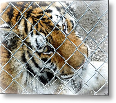 Eyes Of Captivity Metal Print by Heidi Manly