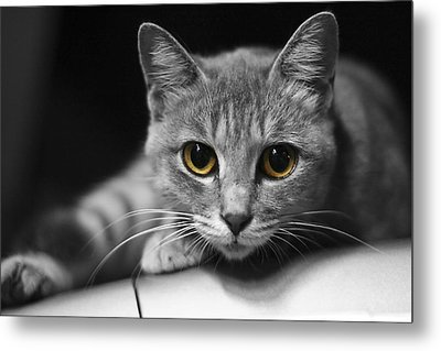 Eyes Open Wide Metal Print