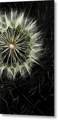 Fading Away Metal Print by Marianna Mills