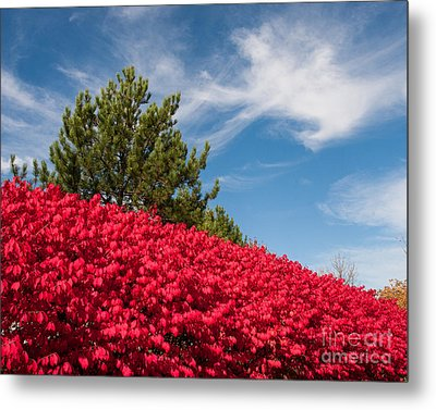 Fall Colors Metal Print by Dale Nelson