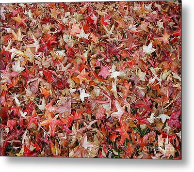 Fall Leaves Metal Print by Bev Conover