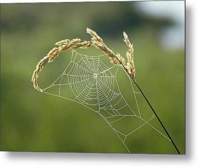 Fall Web Metal Print by Annie Pflueger
