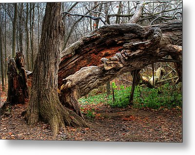 Metal Print featuring the photograph Fallen 1 by Jim Vance