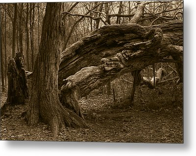 Metal Print featuring the photograph Fallen 2 by Jim Vance