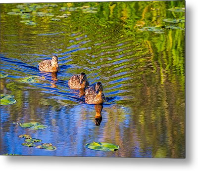 Family Outing On The Lake Metal Print