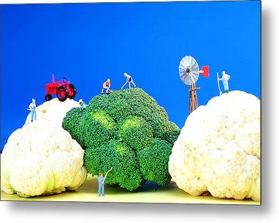 Farming On Broccoli And Cauliflower Metal Print by Paul Ge