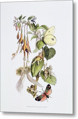 Feasting And Fun Among The Fuschias Metal Print by Richard Doyle