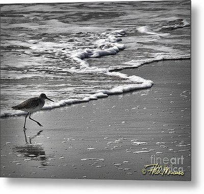 Feathered Friend At The Beach Metal Print by Phil Mancuso