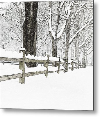 Fenced In Forest Metal Print by John Stephens