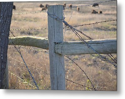 Fenced Metal Print by Kelly Kitchens