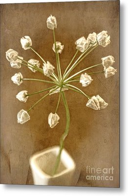 Firecracker Metal Print by Peggy Hughes