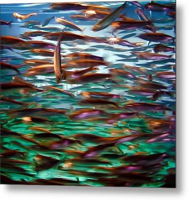 Fish 1 Metal Print by Dawn Eshelman