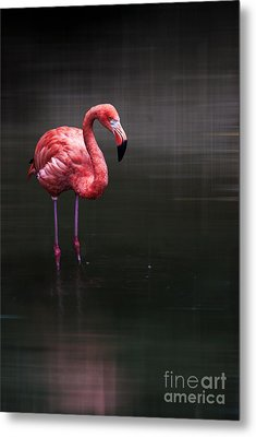 Flamingo  Metal Print by Hannes Cmarits