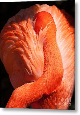 Metal Print featuring the photograph Flamingo Resting by Dale Nelson