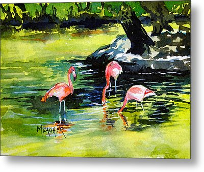 Flamingos At The St Louis Zoo Metal Print by Spencer Meagher