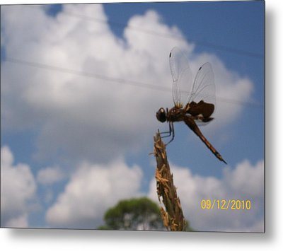 Flight Of The Dragonfly Metal Print by Belinda Lee