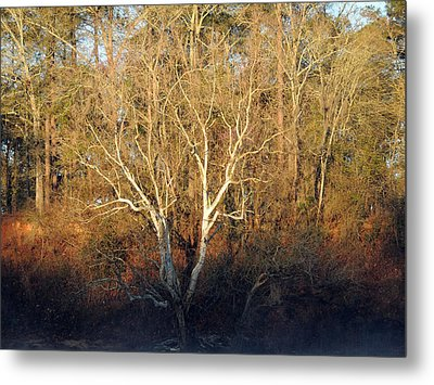 Metal Print featuring the photograph Flint River 16 by Kim Pate