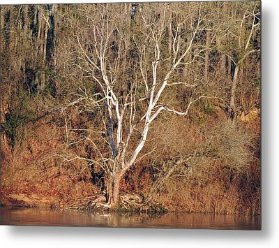 Metal Print featuring the photograph Flint River 25 by Kim Pate