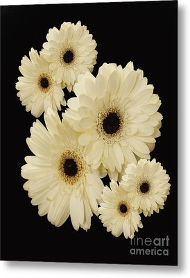 Floating Flowers Metal Print by Nancy Dempsey