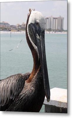 Metal Print featuring the photograph Florida's Finest Bird by David Nicholls