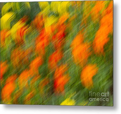 Metal Print featuring the photograph Flower Blur by Dale Nelson