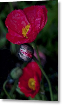 Metal Print featuring the photograph Flower Bud by Haleh Mahbod