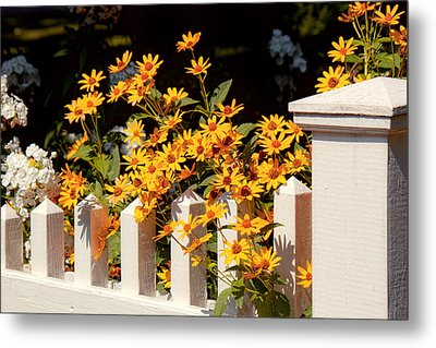 Flower - Coreopsis - The Warmth Of Summer Metal Print by Mike Savad